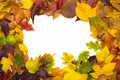 Frame From Autumn Leaves Royalty Free Stock Image - 6599436
