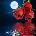 Bouquet From Three Red Roses And Moon. Stock Images - 6603744