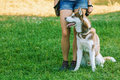 Girl In Shorts With A Husky Sitting On The Grass Stock Photography - 66028022
