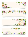 Web Banners With Colorful Pansy Flowers. Vector Eps-10. Royalty Free Stock Photo - 66043415