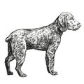 Dog Hunting Hand Drawn Vector Llustration  Sketch Royalty Free Stock Photography - 66070107