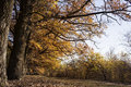 Oak Alley In Autumn Royalty Free Stock Images - 66087619