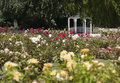 Rose Gardens Royalty Free Stock Photography - 66115697