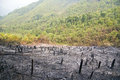 Deforestation, After Forest Fire, Natural Disaster, Laos Royalty Free Stock Photography - 66134757