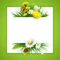 Fresh Spring Background With Grass, Dandelions And Daisies Stock Image - 66134801