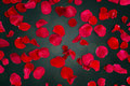 Close Up Of Red Rose Petals Over Lights Background Stock Images - 66200094