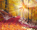 First Snow In The Autumn Royalty Free Stock Image - 66224696