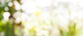 Abstract Nature Bokeh Background Golden Heaven Light Blurred Background From Nature Stock Photography - 66259472