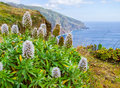 Island Named Madeira Royalty Free Stock Photos - 66286328