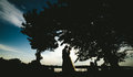 Bride Groom Standing In The Park Stock Photography - 66342172
