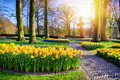 Spring Landscape With Park Alley And Yellow Daffodils Stock Images - 66368204