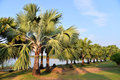 Palm Garden Stock Photo - 66396340