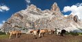 Cows And Horses Under Monte Pelmo In Italian Dolomities Royalty Free Stock Photography - 66399957