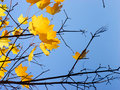 The Last Leaves Royalty Free Stock Photo - 6646595