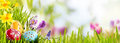 Horizontal Easter Banner With Eggs In A Meadow Royalty Free Stock Photography - 66469687