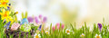 Spring Banner With Easter Eggs Stock Image - 66470301