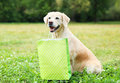 Beautiful Golden Retriever Dog Holding Green Shopping Bag In Teeth On Grass In Summer Stock Photo - 66483300