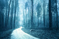Mystical Blue Colored Foggy Forest With Road Royalty Free Stock Photo - 66499075