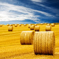 Amazing Golden Hay Bales Stock Image - 6657471