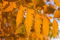 Fall Leaves Stock Photo - 6658940