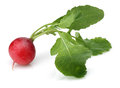 Fresh Red Radish Stock Photo - 66513870