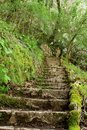 Ancient Stone Stairs In The Forrest Stock Images - 6667234