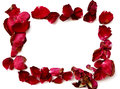 Dried Red Rose Petals Frame On White Background. Royalty Free Stock Images - 66603839