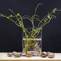 Still Life Composition With Willow Branches With Small Leaves And Pink Roots In A Transparent Vase And Snail Shells Royalty Free Stock Photo - 66614675