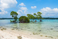 Mangrove Tree And Vast Sea Royalty Free Stock Images - 66618669