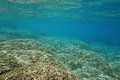 Underwater Shallow Ocean Floor Covered By Corals Royalty Free Stock Image - 66623016