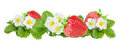 Strawberry Over White Background Stock Images - 66625214