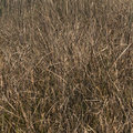 Grasses Background Royalty Free Stock Photo - 66654655