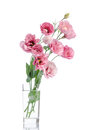 Bunch Of Pink Eustoma Flowers In Glass Vase Stock Photography - 66708962