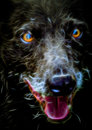Fractal Portrait Of A Dog Stock Images - 66778874