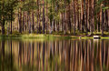 Tree Reflections Royalty Free Stock Photography - 6682527