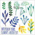 Vector Floral Set. Colorful Floral Collection With Leaves, Drawing Watercolor. Spring Or Summer Design For Invitation, Wedding Or Royalty Free Stock Image - 66817856