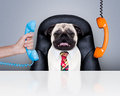 Office Worker Boss Dog Stock Photo - 66868520