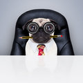 Office Worker Boss Dog Royalty Free Stock Photography - 66868537