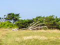 Landscape Of The Jersey Island Stock Photo - 66890470
