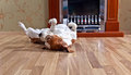 Dog On Wooden Floor Stock Images - 66892124