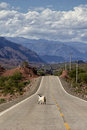 Goat On The Road Stock Photography - 66918532