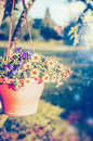 Hanging Flowers Pot With Petunia On Summer Garden Stock Image - 66991061