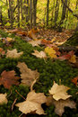 Fall Color On Forest Floor Stock Photos - 6703143