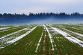 Field With Fog At Forest In Winter Stock Photo - 67006800