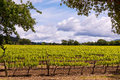 Napa Valley Vineyards, Spring, Mountains, Sky, Clouds,  Hot Air Balloon Stock Image - 67050791