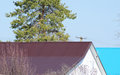 Roof Metal Sheets. Near Conifer. Royalty Free Stock Images - 67058249