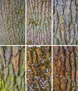 Tree Bark Texture Royalty Free Stock Photos - 67067988