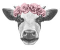 Portrait Of Cow With Floral Head Wreath. Royalty Free Stock Images - 67093819
