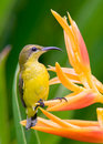 Perched On A Flower Stock Images - 6710104