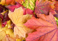 FALLEN LEAVES Stock Images - 6718044